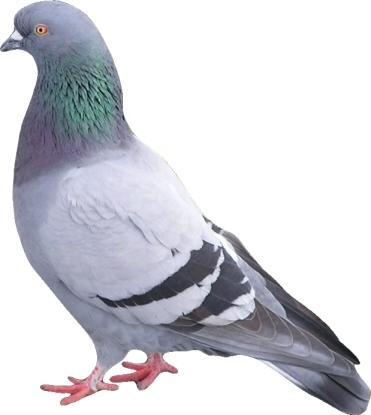 Google Pigeon rebat les cartes dans le référencement local