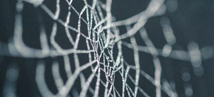 Mesurer l'écosystème des backlinks sur le Web : une problématique complexe