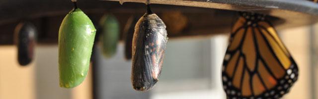 Le cocon sémantique existe-t-il vraiment ? (1ère partie)