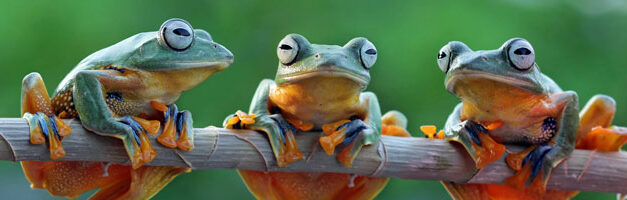 Screaming Frog : Visualisation et Analyse approfondie